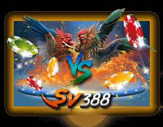 situs judi agen sabung ayam online sv388 indonesia